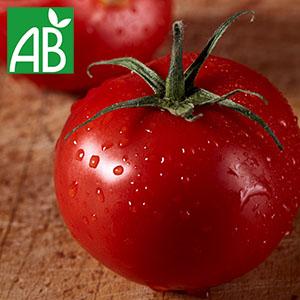 Plant chaud de tomates Pyros biologique à fruit rond et rouges