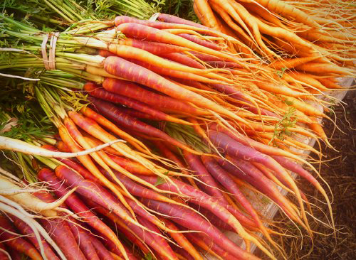Carrots+are+a+healthy,+naturally+sweet+root+vegetable.++Enjoy+them+raw+in+salads,+slaw,+or+as+carrot+_chips_