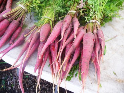 Purple Carrots have the same antioxidants as blueberries. Add some beautiful color and nutritious flavor to your salads and side dishes.