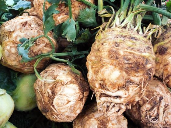 Celery Root makes a delicious mash when paired with spicy horseradish