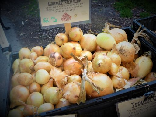 Sweet Candy Onions from Leaning Shed Organic Farm