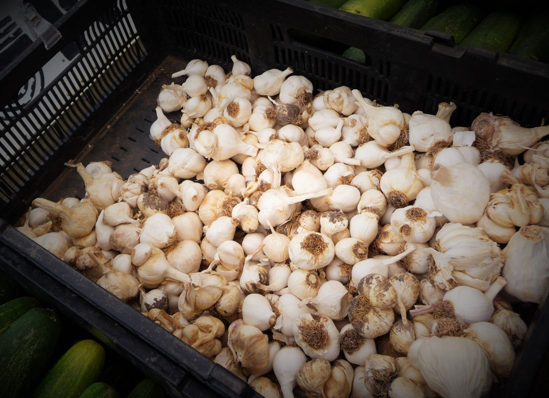 Raw Garlic at the Austin Farmers Market