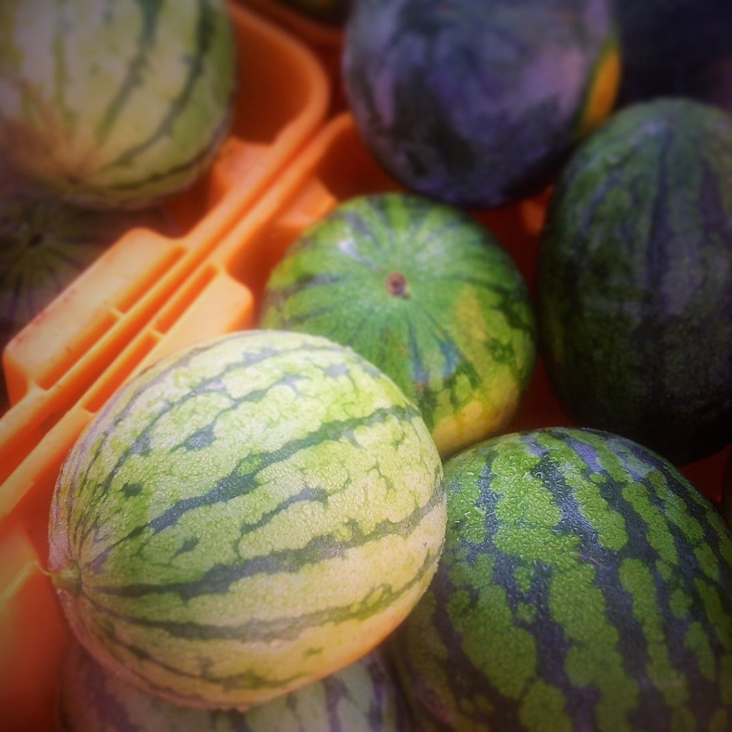 Healthy, delicious organic watermelons are in season during the summer at most farmer's markets