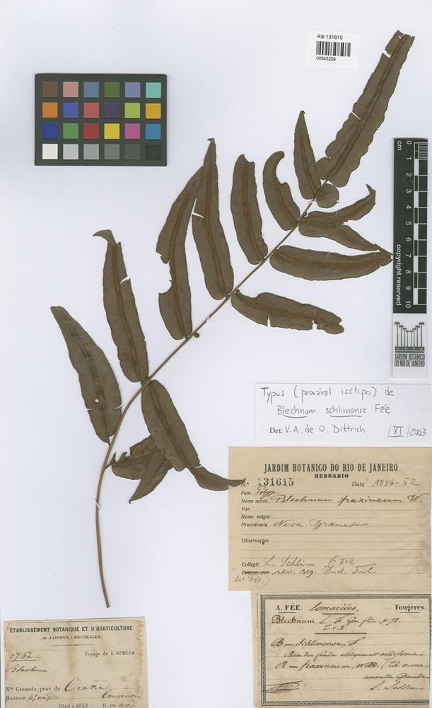 Isotype of Blechnum schlimense Fée [family PTERIDOPHYTA]