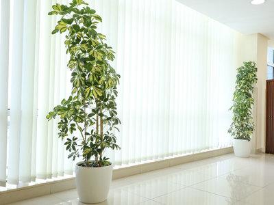 indoor-plants-plantscapes