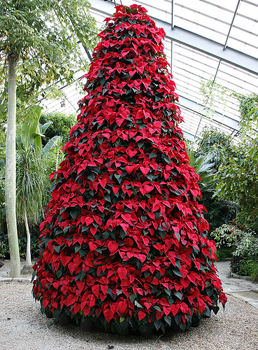 A Tree Made With Poinsettias Will Delight Your Clients
