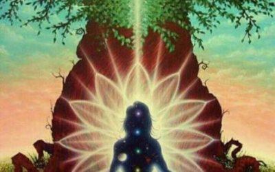 Plant Shamanism Journey, w/ Jan Kinsey
