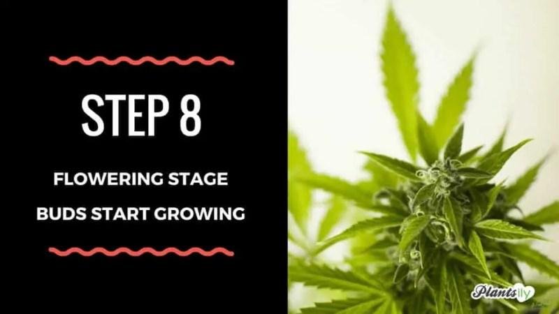 buds start growing