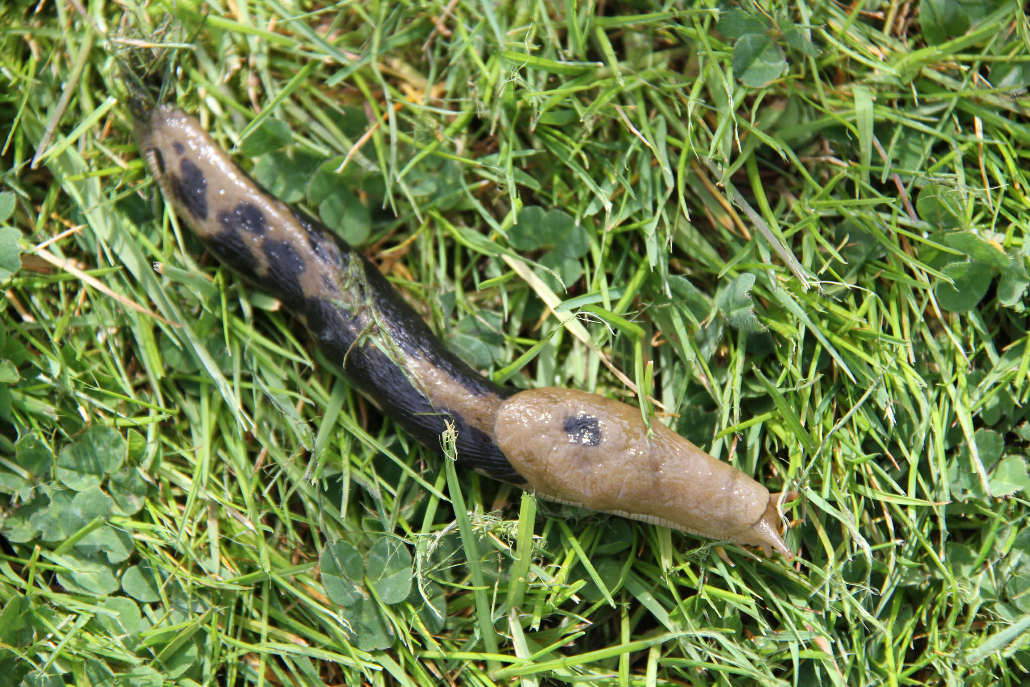 Slug it out with spring's slimy pests