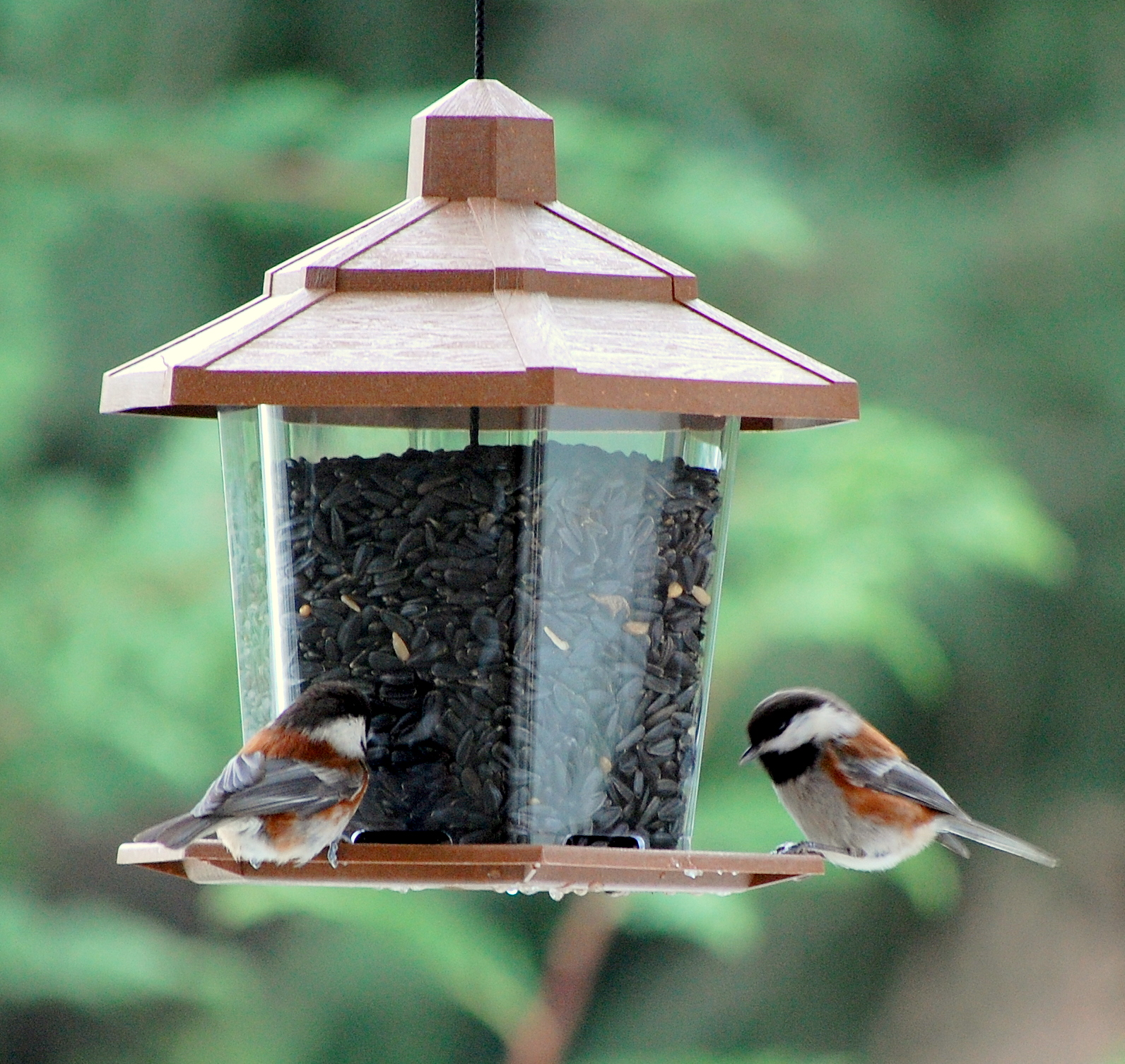 Birds welcome variety that comes with backyard feeders