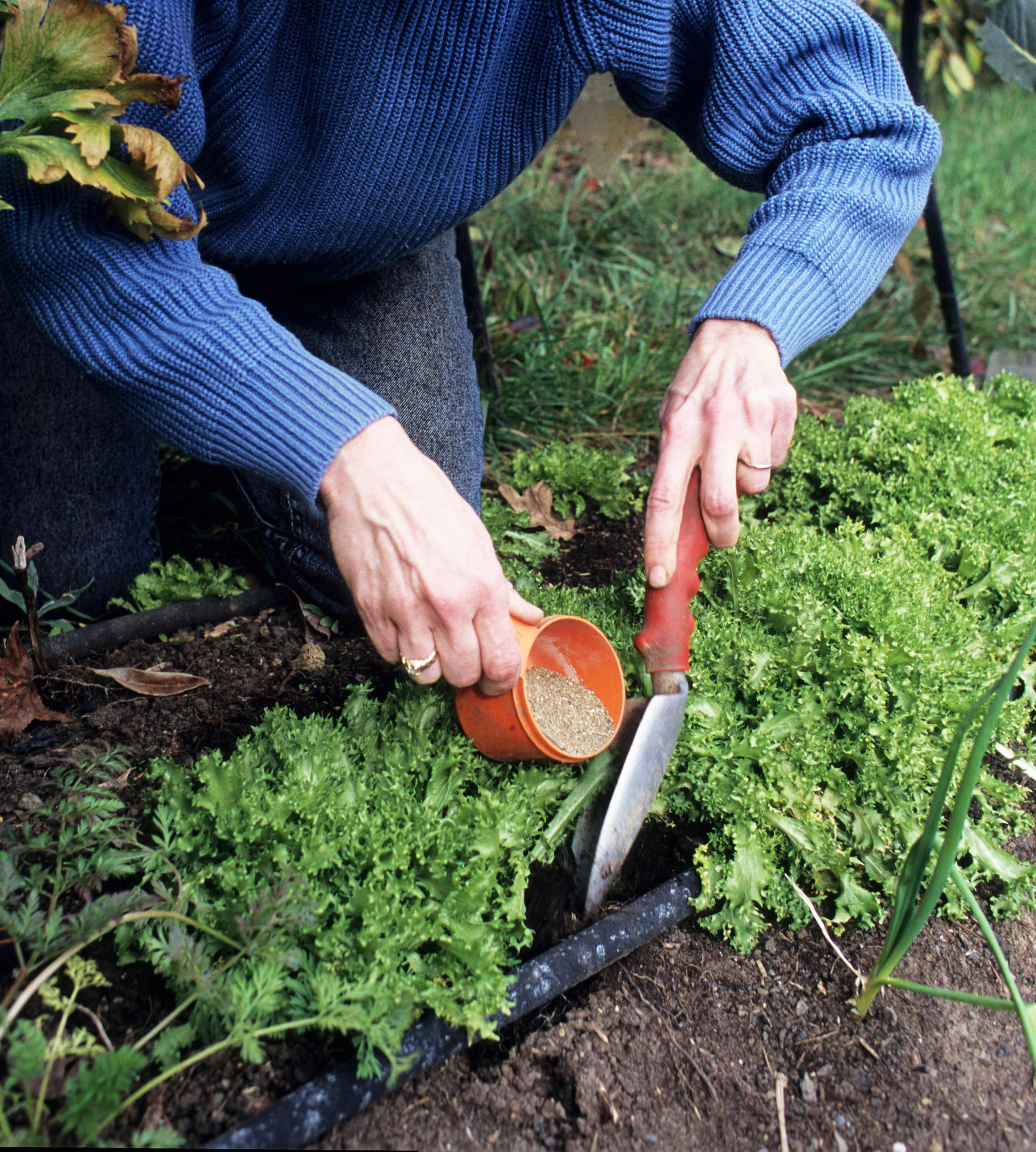 Know what your plants need before fertilizing