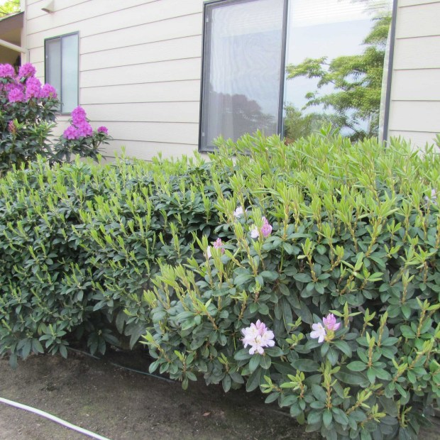 Just say 'no' to bad gardening practices