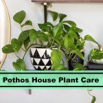 Pothos Plant Care The Ultimate Tips For 2020 Plants Spark Joy