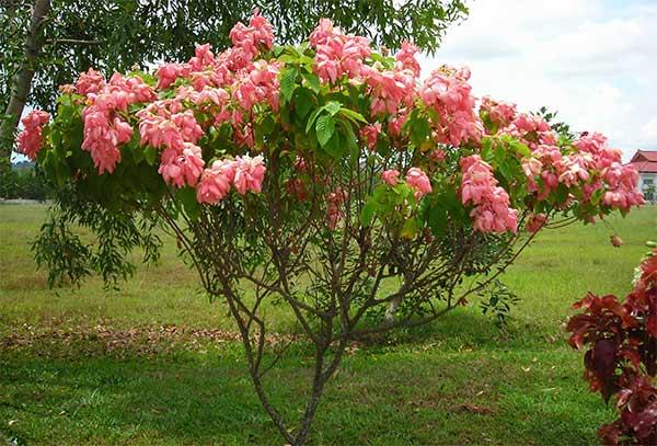 Plants Of Cambodia