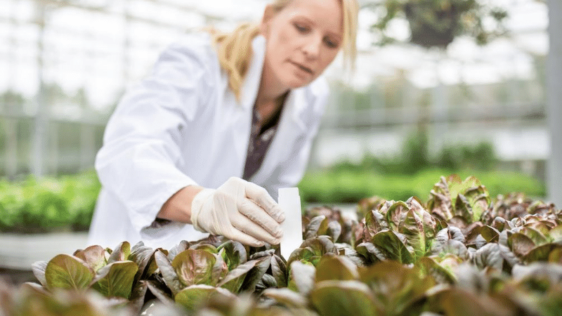 lady propagating plants