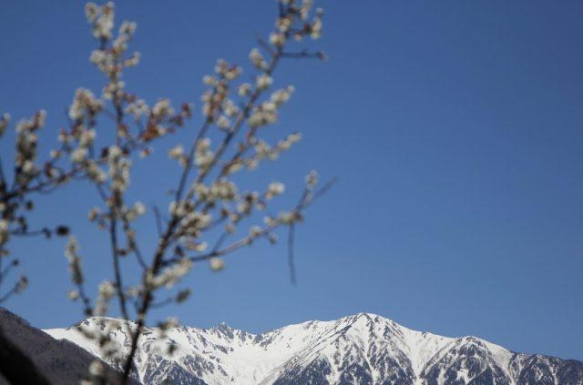 駒ケ岳と梅