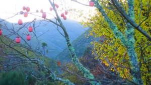 Valle del río Malvellido (Foto: MARIBEL EXPÓSITO AZABAL)