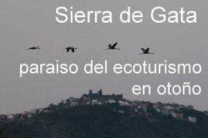 grullas-sierra-de-gata-1-copia