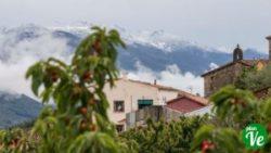 cerezas en el Valle del Jerte Valdastillas