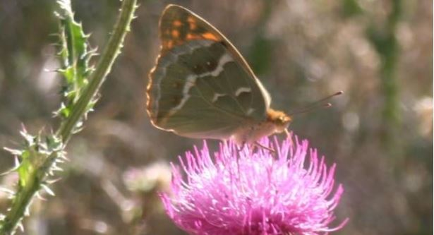 paraiso-mariposas-villamiel