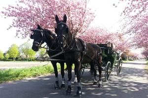 Planwagenfahrt Krefeld Jga Firmenfeier Und Geschenk 35 P P