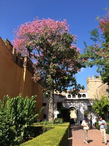 Luego de pasar el umbral de entrada al Real Alcázar