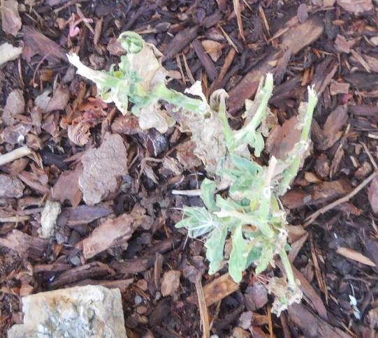 DEAD PLANT (1)