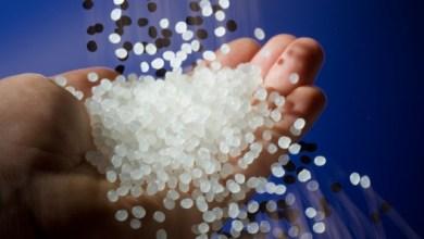 Foto de Madeira feita de polímero transparente pode substituir vidro