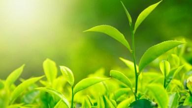 Foto de Embalagem de plástico verde garante prêmio para perfumaria