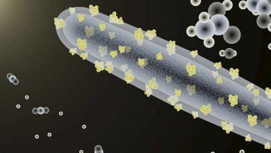 Foto de Plástico feito com nanofibras de celulose é realização brasileira