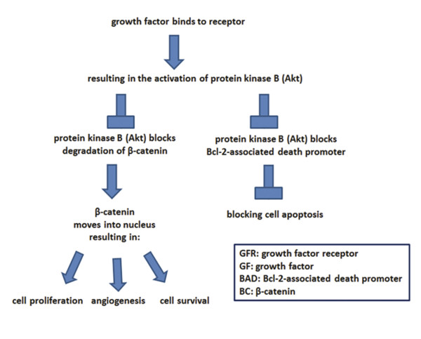 The impact of growth factors on dermal papilla cells. (Adapted from Gupta AK Carviel J. A Mechanistic Model of Platelet-Rich Plasma Treatment for Androgenetic Alopecia. Dermatol Surg Off Publ Am Soc D