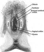 Chapter 2 – Female Genital Anatomy