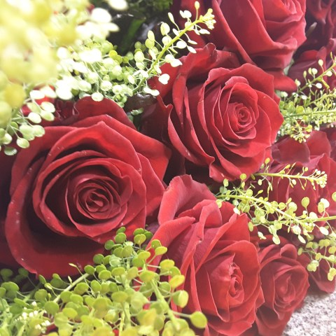 Roses ©Plastiflor