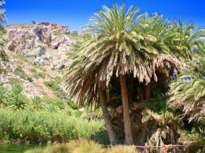Palm trees OF Preveli beach