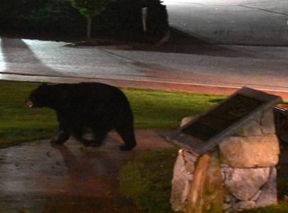 bear (47)