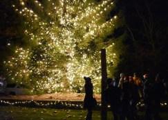 Christmas.Tree.Lighting.Cashiers (27)