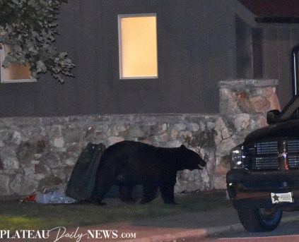 bear (3)
