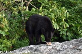 bear (4)