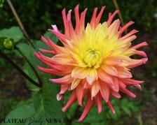 bees.flowers (2)