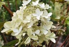 bees.flowers (4)