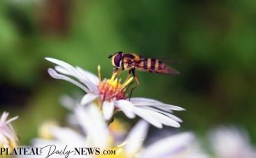 bees.flowers (6).edit