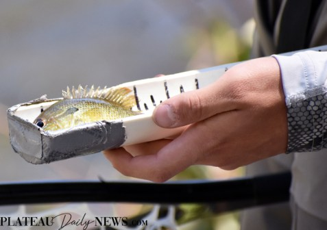 Fly.Fishing.East.Fork (5)