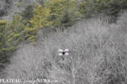 drones (18)