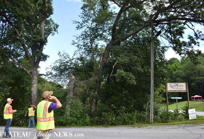 Fallen.Tree (1)