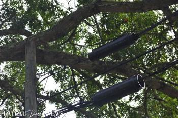 Fallen.Tree (4)