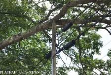Fallen.Tree (5)