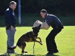 HPD.Dog (24)