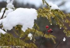Snow (14)