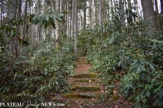 Greenway.Oak (1)