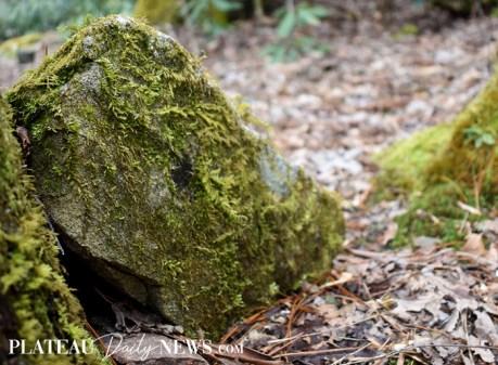 Highlands.Biological (13)